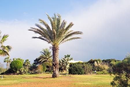 palmier sur fond dans le ciel