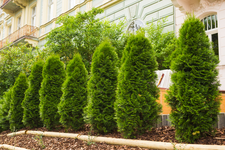 Avenue of cypresses Stock Photo