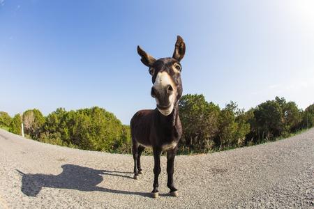 jack ass: Portrait of funny wild donkey