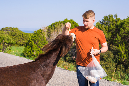 fondling: man caressing and feed a wild donkey Stock Photo