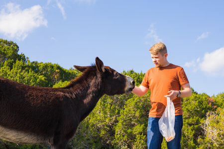 environmentalist: man caressing and feed a wild donkey Stock Photo