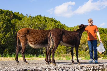 fondling: man caressing and feed a wild donkeys