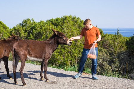 man caressing and feed a wild donkeys