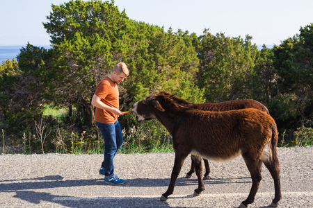 Young Man Feeding A Wild Donkeys Out Of Hand. Wildlife, Mammals ...