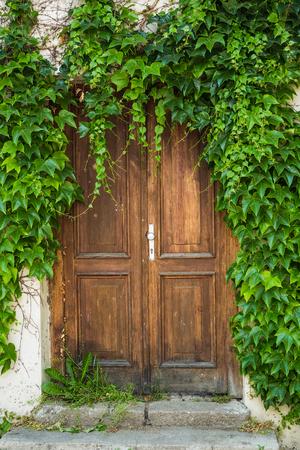 Ancient old wooden door with green plants.