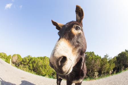 Portrait of funny wild donkey