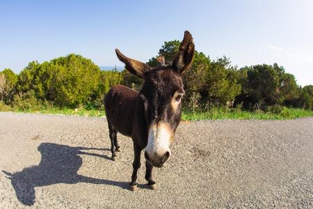 big ass: Wild funny donkey outdoors Stock Photo