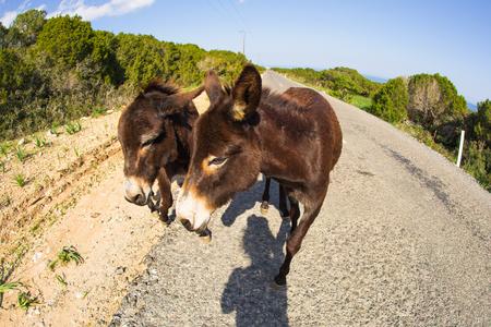 big ass: Wild funny donkeys outdoors Stock Photo