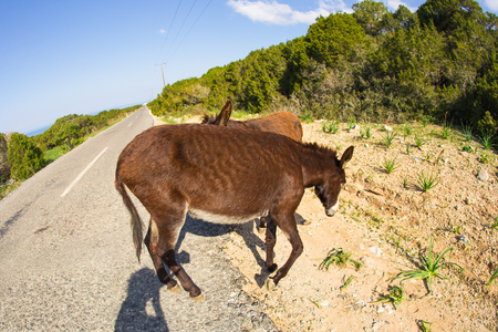 jack ass: funny wild donkeys Stock Photo