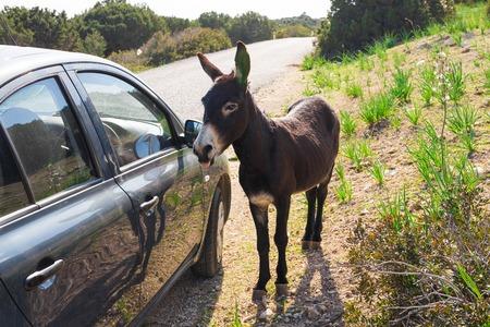 jack ass: funny wild donkey Stock Photo
