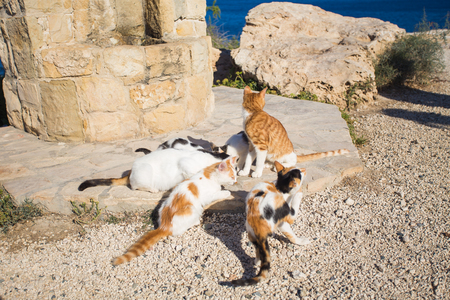 gray cat: Cats in Cyprus in summertime. Homeless animals concept.