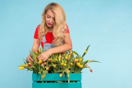 Floristics, holidays, flower shop and people concept - Beautiful blond young woman fixing bouquet of tulips on blue background. Stockfoto