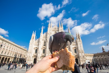 Travel, Italy and birds concept - Funny pigeons eats by hand in front of Duomo cathedral, Milan