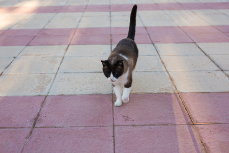 Pet, spring and animals concept - Cute cat walking outdoor