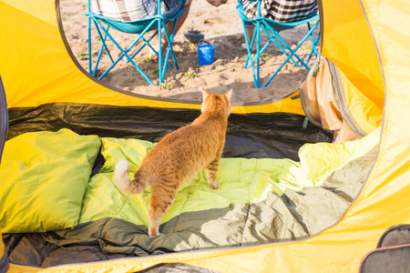 Pet, tourism and nature concept - Cute cat sitting near yellow tent