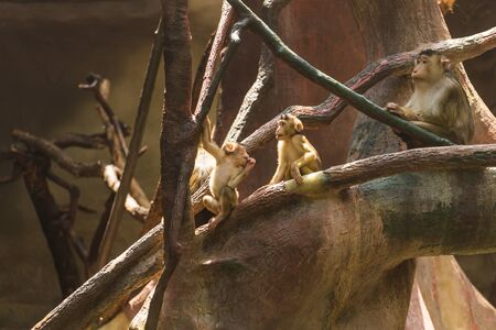 Cute little monkeys are sitting on the branches of a spreading tree and have a rest on a sunny warm summer day. Animal monkey life at the zoo concept. Фото со стока