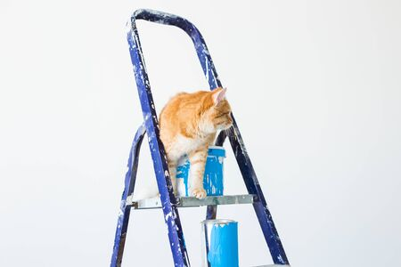 Repair, painting the walls, the cat sits on the stepladder. Funny picture.