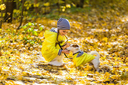 Child plays with Jack Russell Terrier in autumn forest. Autumn walk with a dog, children and pet concept. 版權商用圖片 - 155234109