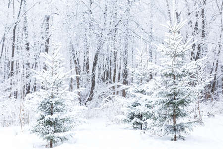 Season and nature concept - Winter park in snow