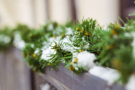 Christmas decor railing branches of a blue Christmas tree. Decoration outside the house to create a festive atmosphere