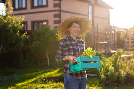 Hardworking young woman gardener in straw hat picks up her harvest box of vegetables on sunny summer day. Concept of organic farming and vegetable growing