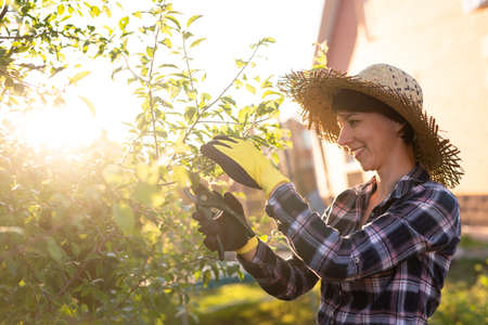 Side view of focused young caucasian woman gardener cuts unnecessary branches and leaves from tree with pruning shears while processing an apple tree in the garden. Organic gardening concept 版權商用圖片