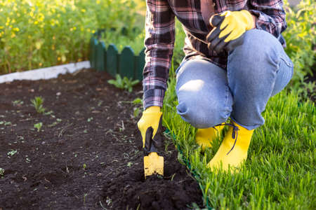 Close-up of woman gardener plants plants in the garden bed in spring on a warm sunny day. Organic farming and hobby concept