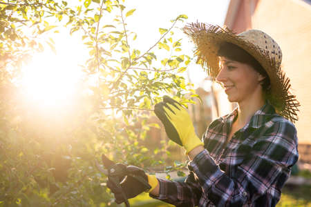 Side view of joyful young caucasian woman gardener cuts unnecessary branches and leaves from a tree with pruning shears while processing an apple tree in the garden. Gardening and hobby concept 版權商用圖片