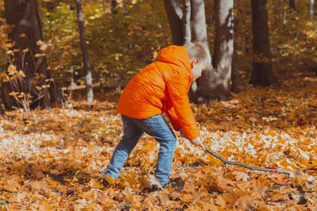 Little boy play with stick and fallen leaves in forest on autumn day. Fall season, childhood and outdoor games concept. Stock fotó