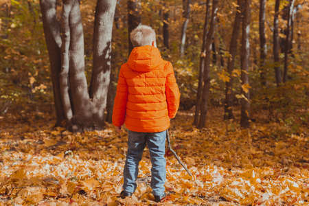 Little boy play with stick and fallen leaves in forest on autumn day. Fall season, childhood and outdoor games concept.
