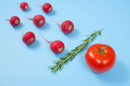 Spermatozoon swimming toward the egg isolated on blue background. Human Sperm, crimson red radish, rosemary and red tomato vegetable isolated. New life conception