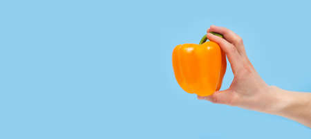 Hand holding organic delicious pepper Isolated on red Background. Healthy eating and dieting concept