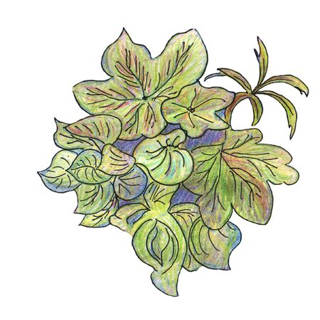 녹색 꽃 스톡 콘텐츠