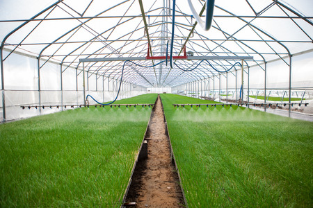 seed bed: Greenhouse watering system in action Stock Photo
