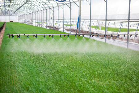 Greenhouse watering system in action Standard-Bild
