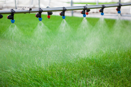 Greenhouse watering system in action Archivio Fotografico