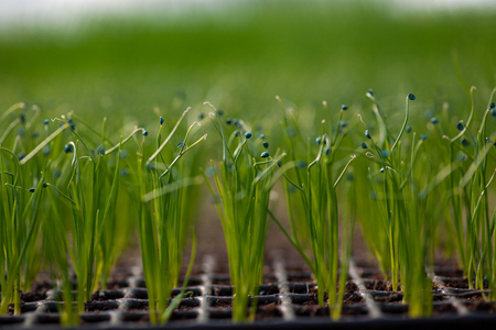 cultivation: Cultivation of seedlings Ecology World Environment Day CSR Seedling Go Green Eco Friendly Earth Health Care Food Garden New Life concept. Stock Photo