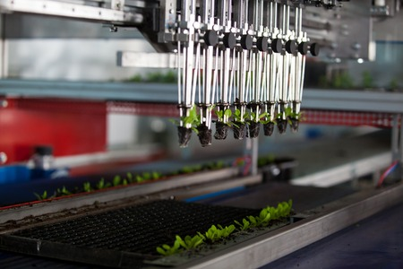 Mechanical planting seedlings. Machine with grippers planting seedlings. Serial planting. Stock Photo
