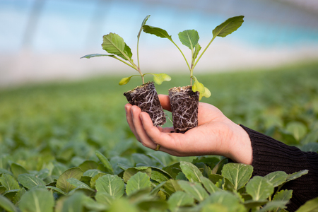 earth handful: Human hands holding young plant with soil over blurred with nature background. Ecology World Environment Day CSR Seedling Go Green Eco Friendly Earth Health Care Food Garden New Life concept.