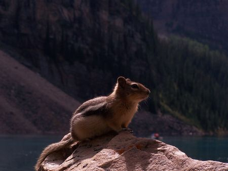 Squirrel in Moraine Lake