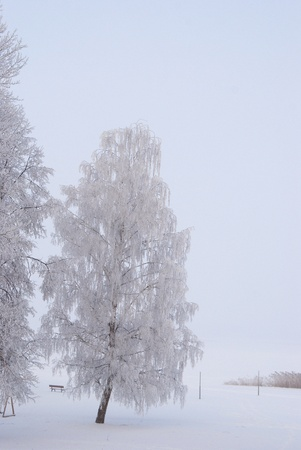 wonderful rime on the branches of the tree Stock Photo