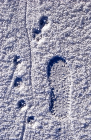 Man came here with his four-legged friend. Traces on snow. photo