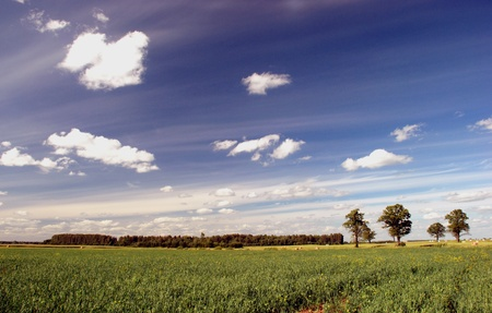 agrarian: Agrarian summer landscape with oaks and grove
