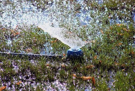 Artificial rain drops from grass sprinkle photo