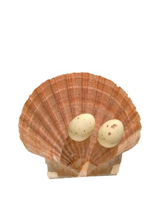 Easter eggs decoration on the sea shell isolated on a white background
