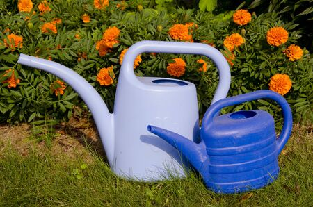 Two blue watering-cans near orange flowers waiting for the drought. photo