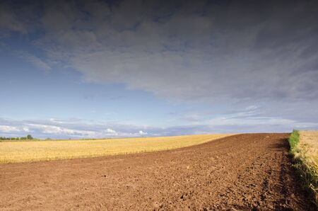harvests: Agricultural view - plowed field. harvested. Wonderful view of sky with clouds.