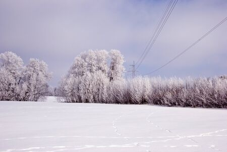 Hoarfrost on the trees and high voltage electricity wires.