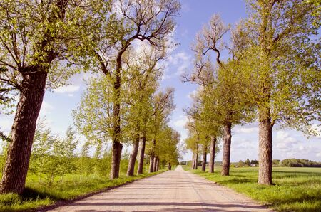Dry gravel road with trees planted on both sides. Stock Photo