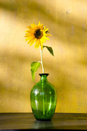 Sunflower in glass container on yellow wall background. Beautiful home decoration.